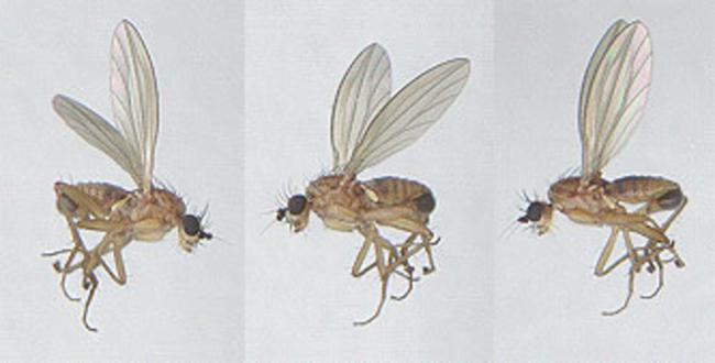 thumbnail species image