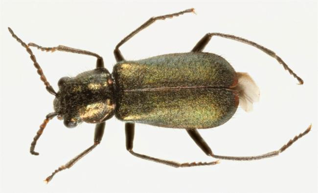 thumbnail species image